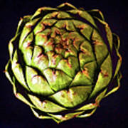 The Patterns Of The Artichoke Art Print