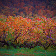 The Peach Orchard Art Print
