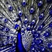 The Peacock Fan Art Print