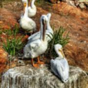 The Pelican Clan Art Print