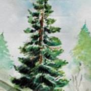 The Pine  Art Print