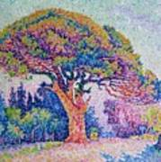 The Pine Tree At Saint Tropez Art Print