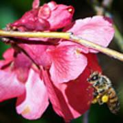 The Pollinator Art Print