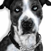 The Pooch With Blue Eyes Art Print