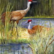 The Protector - Sandhill Cranes Art Print