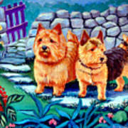 The Purple Gate - Norwich Terrier Print by Lyn Cook