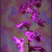 The Purple Orchid Art Print