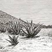 The Pyramid Of The Sun, Teotihuacan Art Print