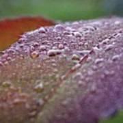 Rain Falls Lightly Art Print