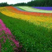 The Rainbow Of Flower At Hokkaido Art Print