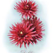 The Red Dahlia Art Print