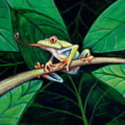 The Red Eyed Tree Frog Art Print