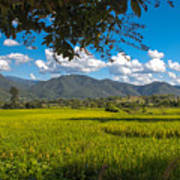 The Rice Fields Of Pai, Thailnad Art Print