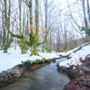 The River In The Otzarreta Forest With Snow Art Print