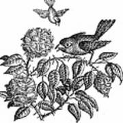 The Roses And The Sparrow Art Print
