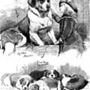 The Saint Bernard Club Dog Show Art Print