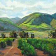 The Scent Of Citrus - Santa Paula Citrus Grove Central Coast Landscape Art Print