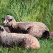 The Sheep Are Resting Art Print