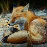 The Sleepy Fox Art Print