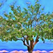 The Smiling Tree Of Benitses Art Print
