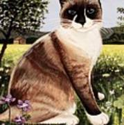 The Snowshoe Cat Art Print