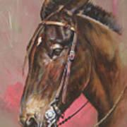 The Spanish Mule Art Print