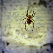 The Spider Waits Art Print