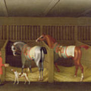 The Stables And Two Famous Running Horses Belonging To His Grace - The Duke Of Bolton Art Print