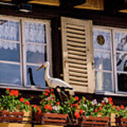 The Stork Has A Delivery - Colmar France Art Print