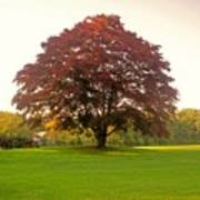 The Storybook Tree Art Print