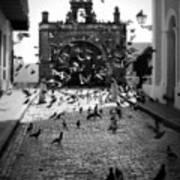 The Street Pigeons Art Print