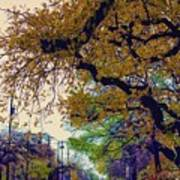 The Street Trees Art Print