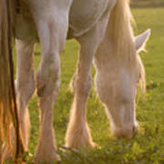 The Sunlight Caught In The Horse Tail Art Print