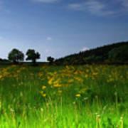 The Sunny Meadow Art Print