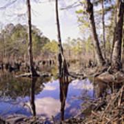 The Swamp Art Print