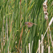 The Swamp Sparrow In-flight Art Print