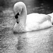 The Swans Solitude Art Print
