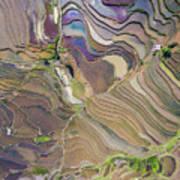 The Terraces Of Yuanyang China Art Print
