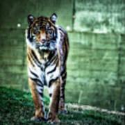 The Tigress Art Print