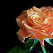 The Touch Of A Rose Art Print by Tracy Hall