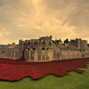 The Tower Poppies  Art Print