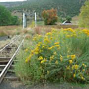 The Tracks At Pagosa Junction Art Print