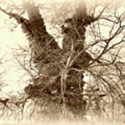 The Tree - Sepia Art Print
