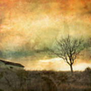 The Tree And The Roof Top Art Print