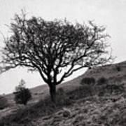 The Tree On The Fell Art Print