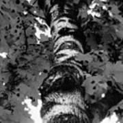 The Tree Art Print