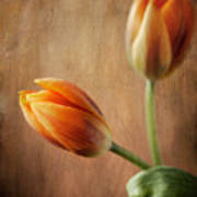 The Tulips Art Print