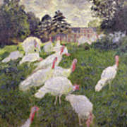 The Turkeys At The Chateau De Rottembourg Art Print by Claude Monet