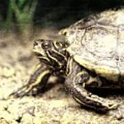 The Turtle Art Print