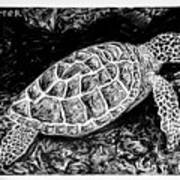 The Turtle Searches Art Print